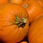 pumpkin-3636243_1920
