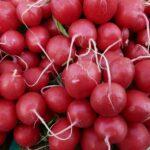 radishes-5739_1920